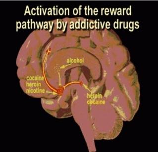 Reward Pathway-Addiction Neuroscience